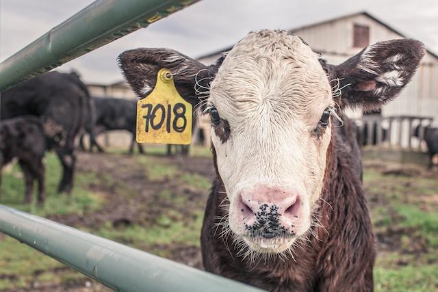 animal-countryside-agriculture-farm